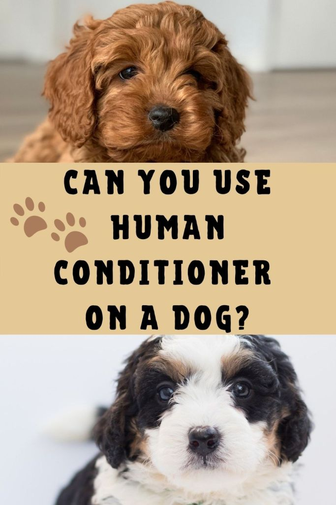 Can I Use Human Conditioner On My Dog