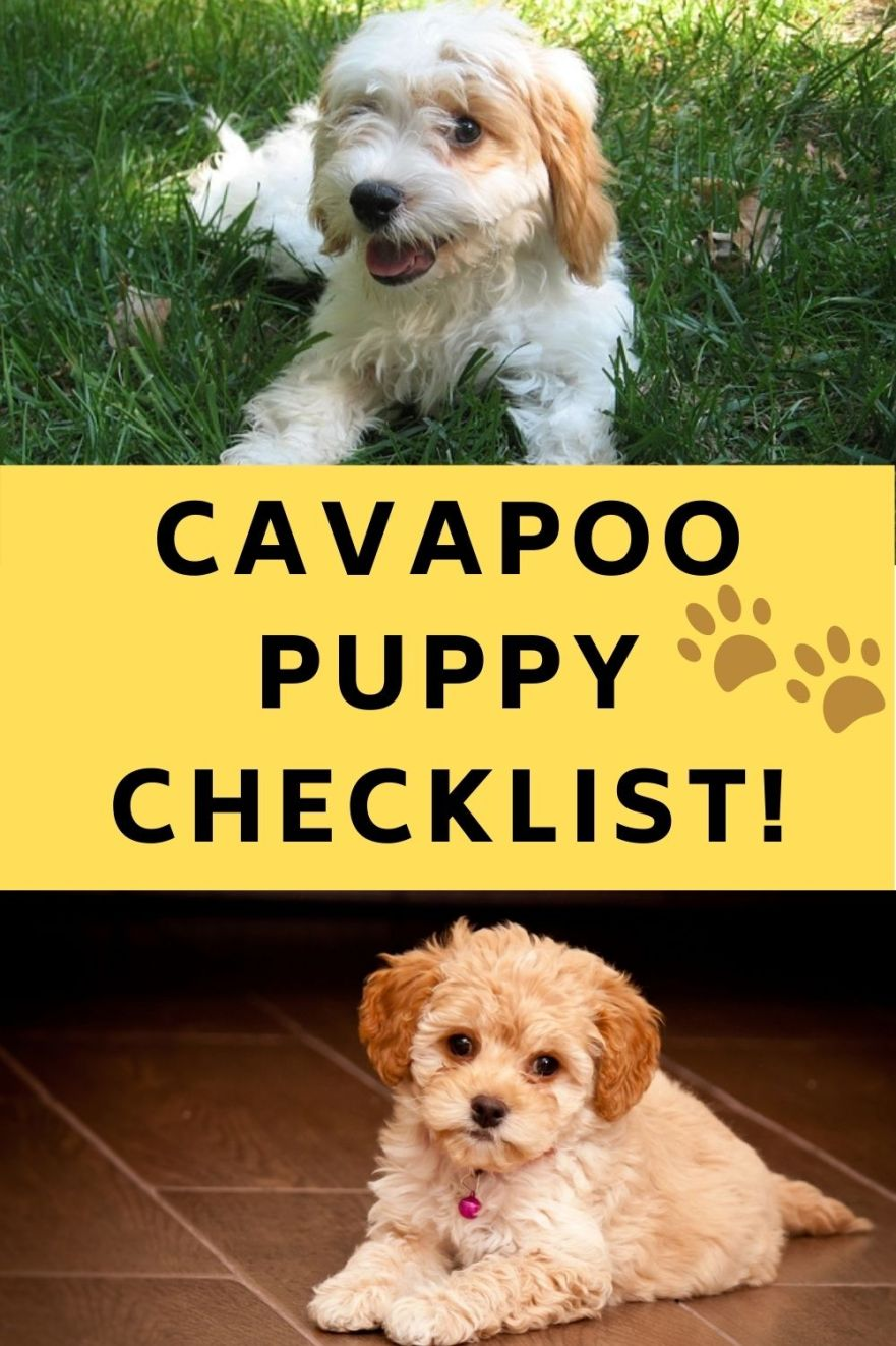 Cavapoo Puppy Checklist