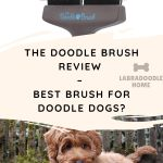 The doodle brush review