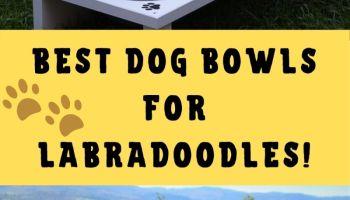 best dog bowls for labradoodles