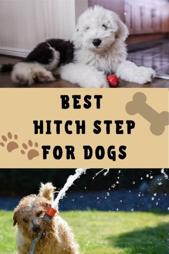 best hitch step for dogs