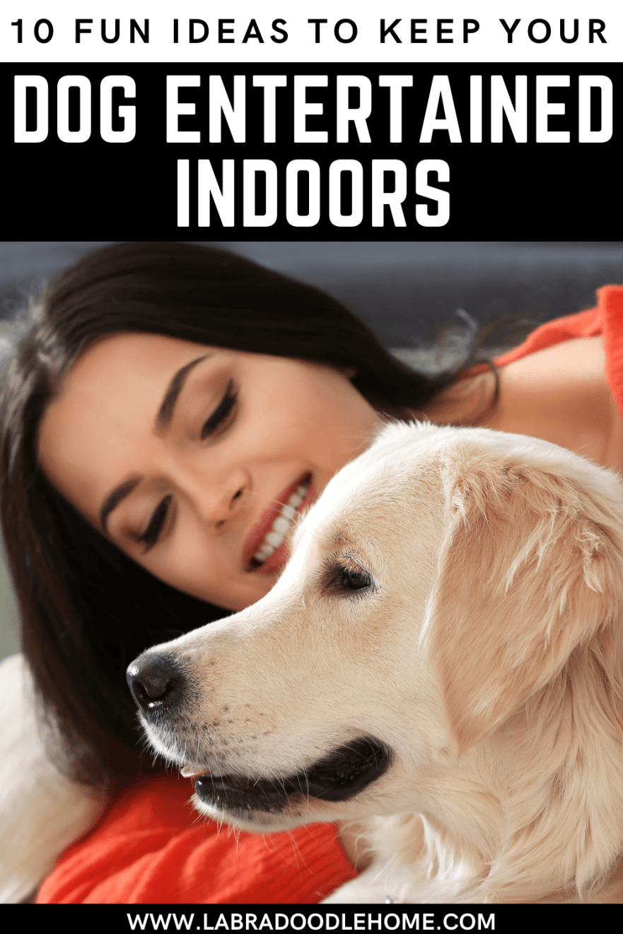 fun ideas to keep your dog entertained indoors