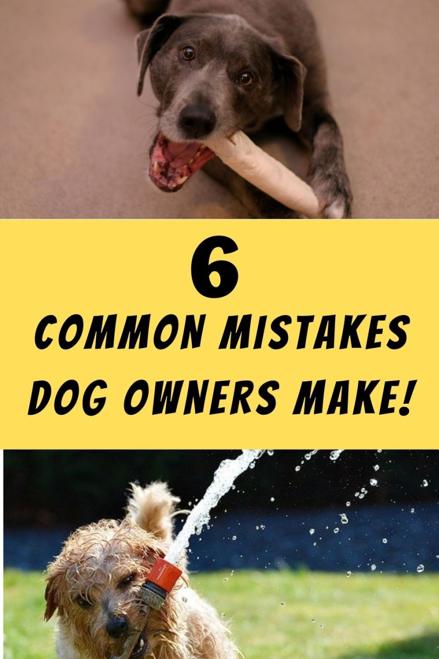Common Mistakes Dog Owners Make