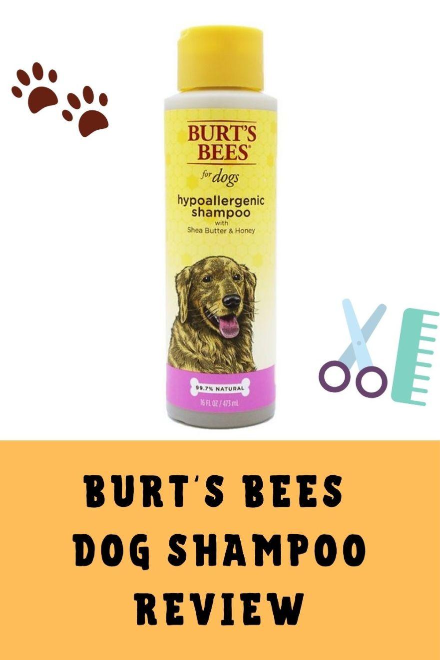 Burt's Bees Dog Shampoo Review