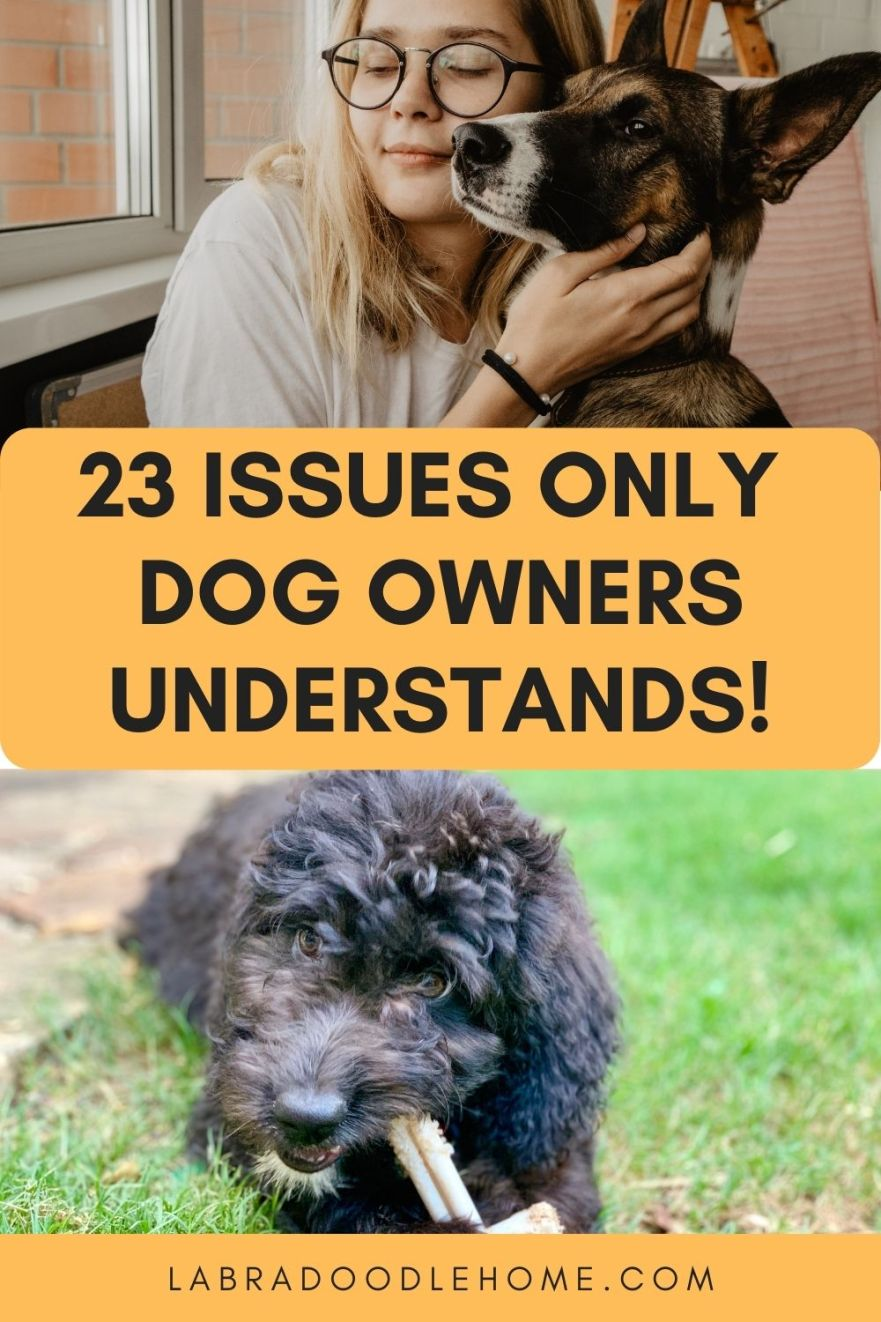issues only dog owners understands
