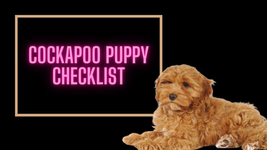 Cockapoo Puppy Checklist