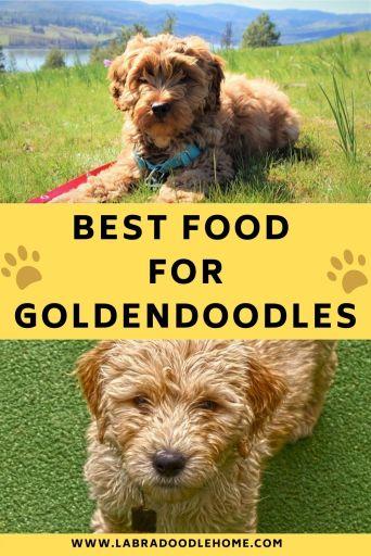 best food for goldendoodles