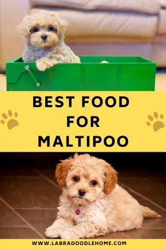 best food for maltipoo