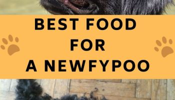 best food for newfypoo