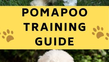 pomapoo training guide