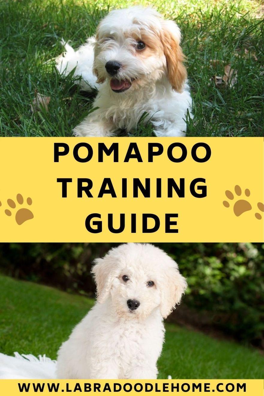 pomapoo training guide
