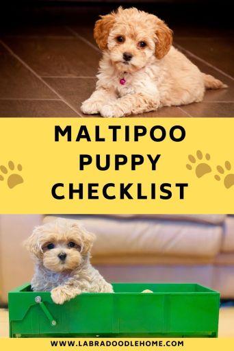 maltipoo puppy checklist