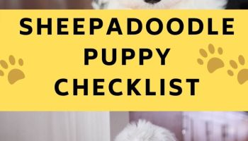 sheepadoodle puppy checklist