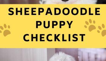 sheepadoodle puppy checklist