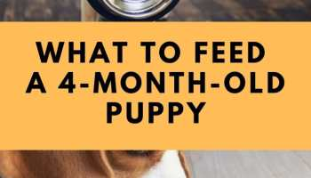 WHAT TO FEED A 4 MONTH OLD PUPPY