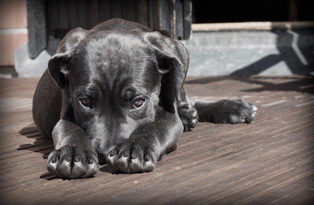 Can Grain-Free Dog Food Cause Diarrhea Benefits of a Grain-Free Diet