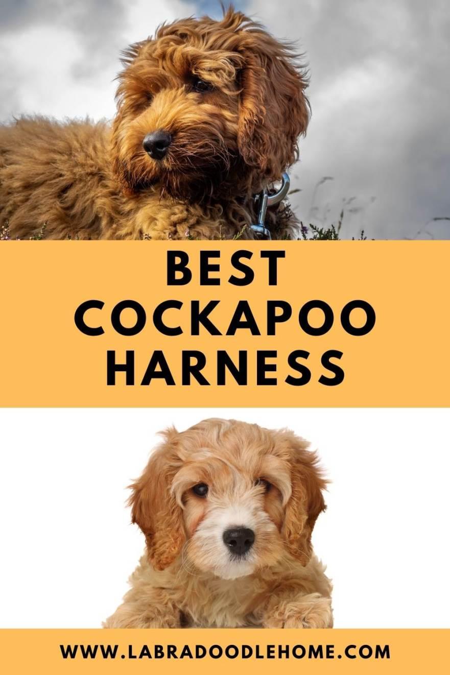 best cockapoo harness