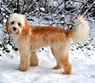 Baileys first snow2