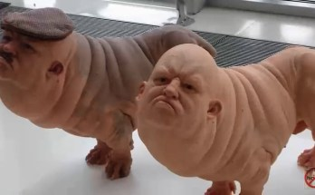 humador-lab-created-dog-sharing-human-and-dog-dna