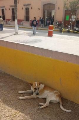 v reyes-perros-