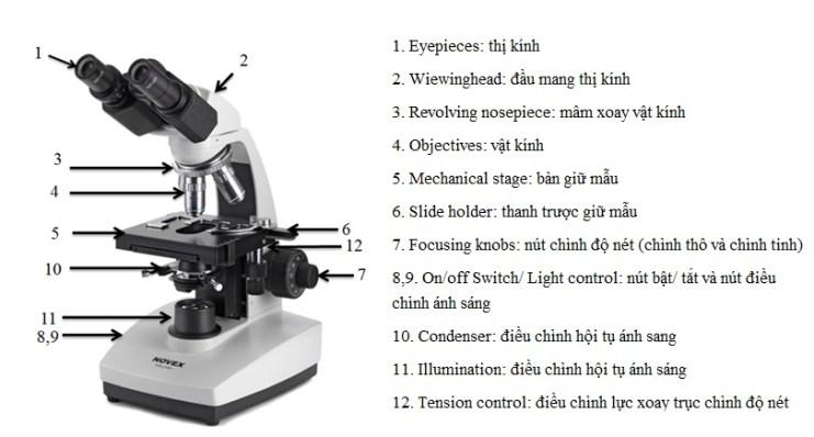 Hướng dẫn sử dụng kính hiển vi euromex