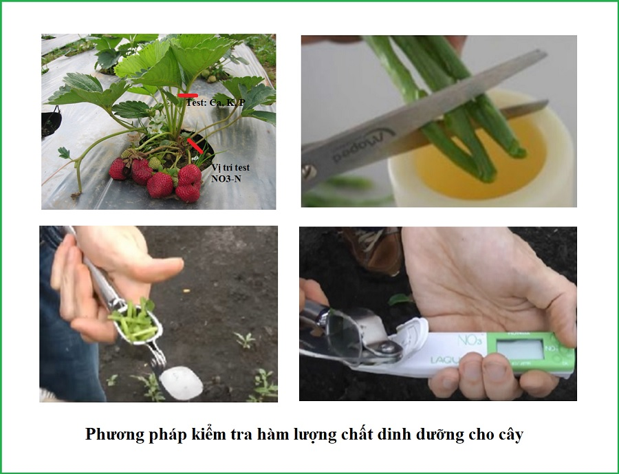 Cách kiểm tra hàm lượng dinh dưỡng trong cây