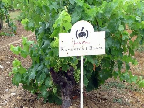 Variedades de uva en el Cava