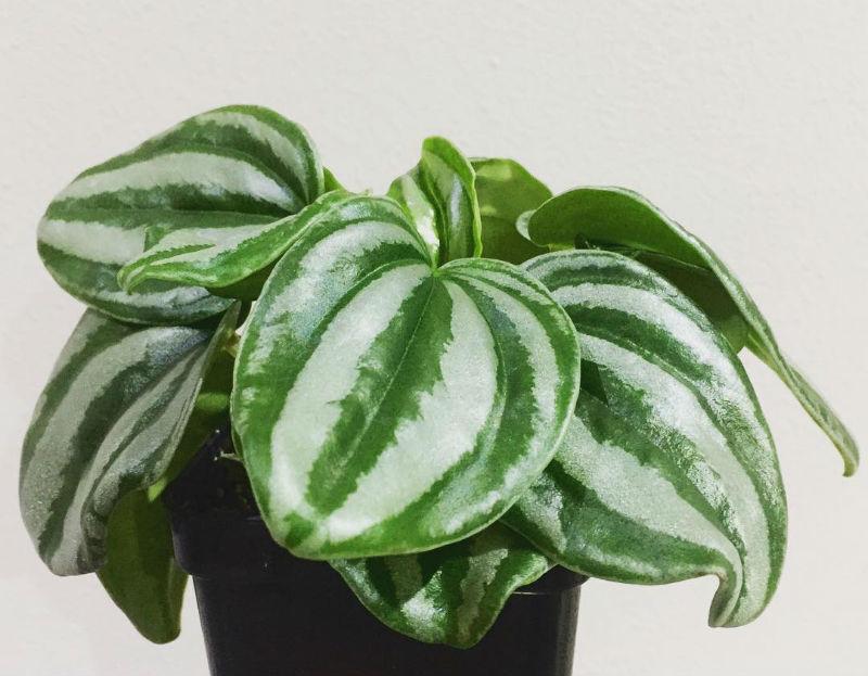 10 plantas dificiles de matar