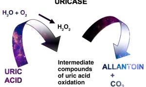 Uric acid measurement