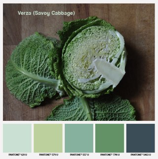 lacaccavella, foodcolors, colors, pantone, green, verde, verza, cabbage