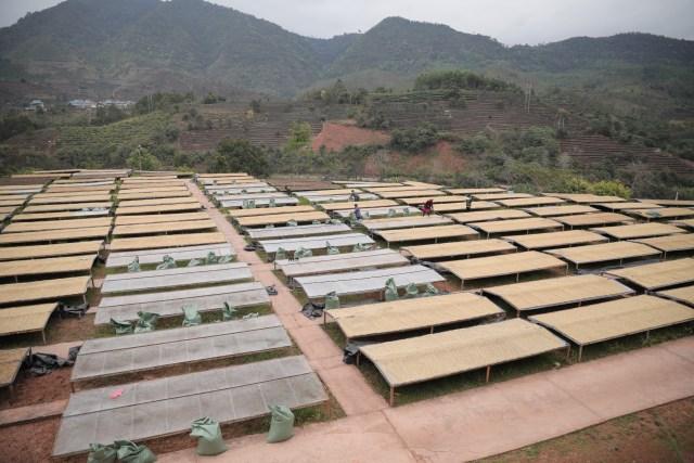 12 Coffee Farm in Yunnan Province.JPG