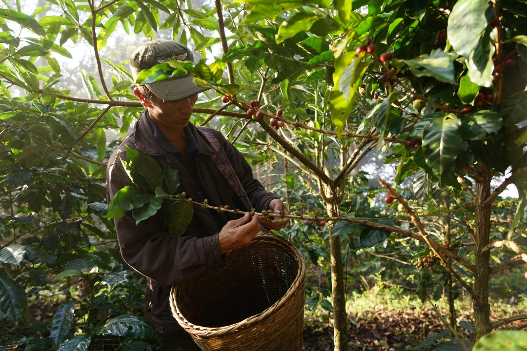 13Coffee Farmer of Yunnan.JPG