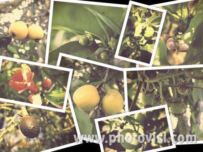 fruits_primavera_LaCalafa2015