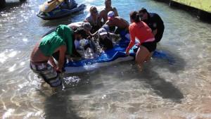 Ciudadanos y personal de Recursos Naturales intentan salvar una de las ballenas varadas en Crash Boat (Suministrada).