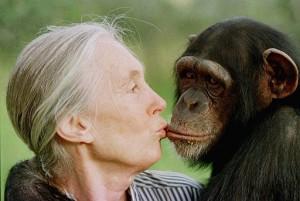 La Dra. Jane Goodall, reconocida ambientalista de fama mundial estará en Mayagüez (Archivo).