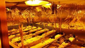 Parte del invernadero donde llevaba a cabo el proceso de fotosíntesis de la marihuana con luz artificial (Suministrada Policía).