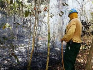 Bombero forestal en plena faena (Suministrada DRNA).