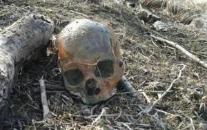 El cráneo fue encontrado en circunstancias parecida al de esta foto de archivo, (Tomada de Internet).