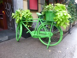 A very green flower box in Ljubljana, Slovenia.