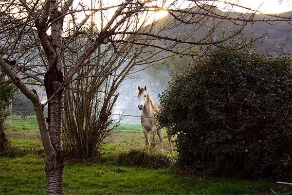 - La Casa Azul de Las Caldas - Las Caldas de Oviedo - Entorno Rural en Asturias