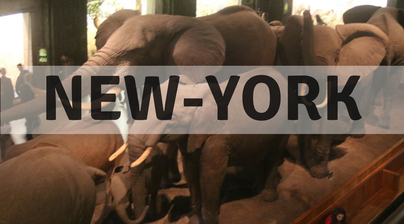 {New York} American Museum of Natural History, Tussaud, and a strike