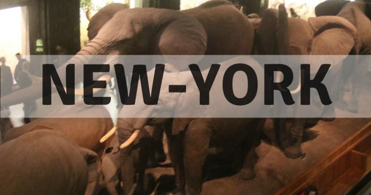 {New York} Le Museum d'Histoire Naturelle, Tussaud et une grève