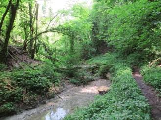 la foresta del Rio Ramato