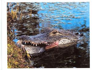 Alagator