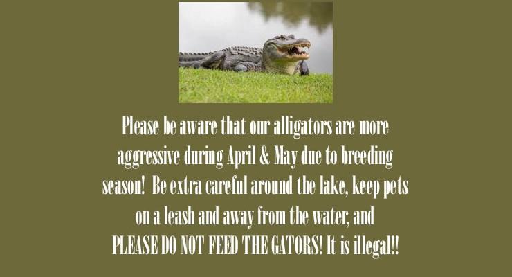 Alligator Warning – Spring 2019