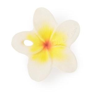 Hawaii-the-Flower-oli&carol