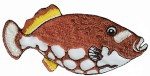4 1/4'' by 2'' Fish Appliques - 4 Colors4 1/4'' by 2'' Fish Appliques - 4 Colors