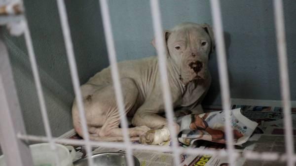 Activistas en Cuernavaca exigen aprobación de la reforma que aumentará las sanciones por maltrato animal
