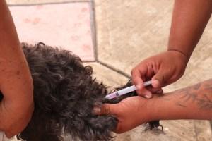 Jornada de vacunación antirrábica y esterilización canina y felina - Emiliano Zapata - Morelos