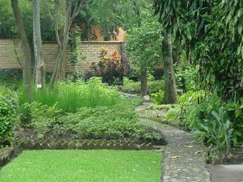Jardín Etnobotánico y Museo de Medicina Tradicional y Herbolaria